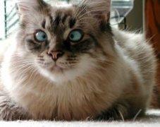 cat's eyes crossed stressed