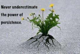 persistence flower