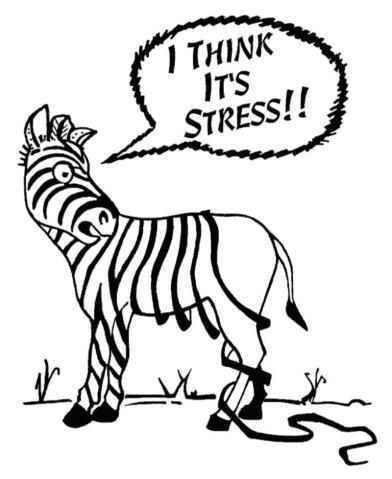 zebra-stress